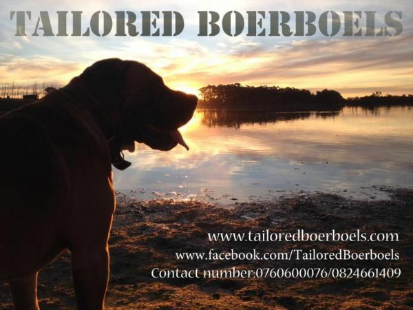 Tailored Boerboels