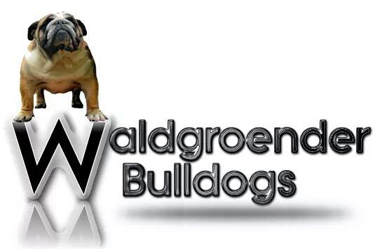 Waldgroender Bulldog Breeders